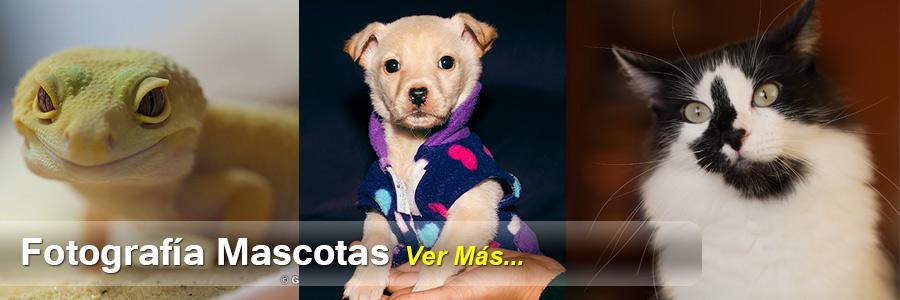Servicio-Fotografico-Mascotas